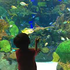 Ripley's Aquarium of Canada - Real Photos by Real Travelers