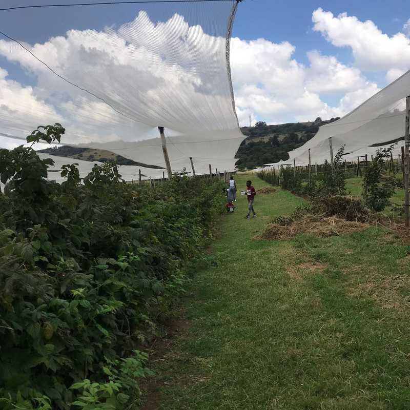 The Field Berry Farm