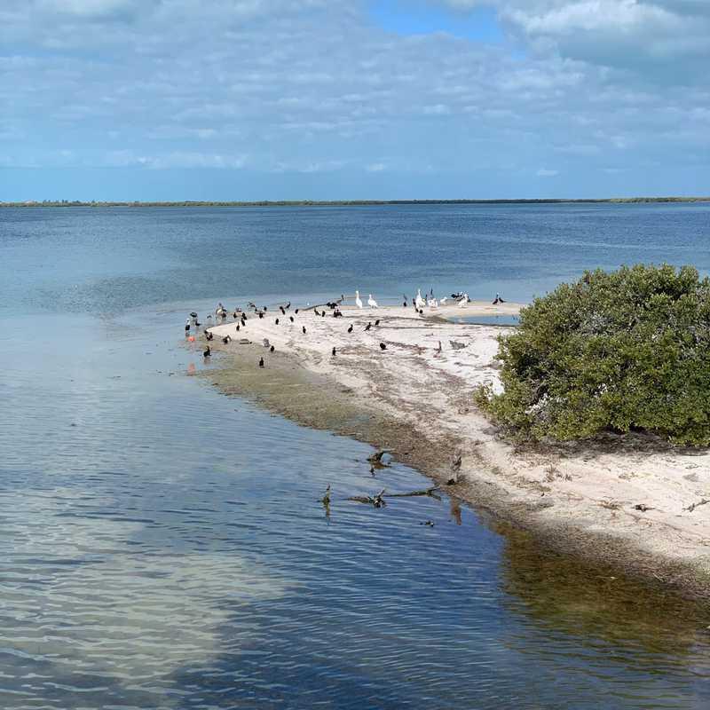 Isla de los Pajaros