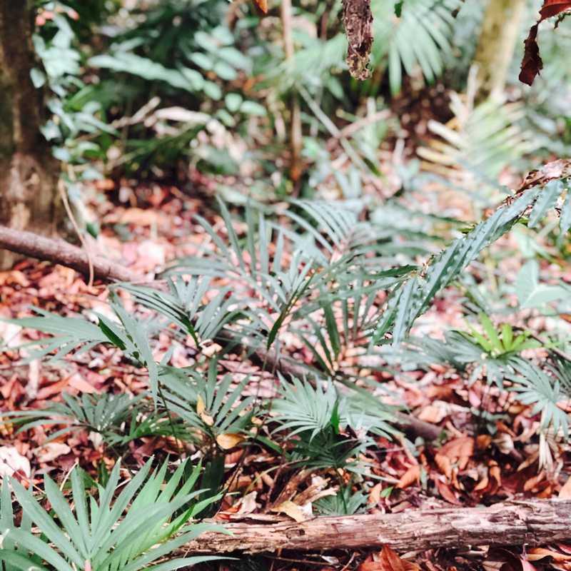 Flora of Rainforest