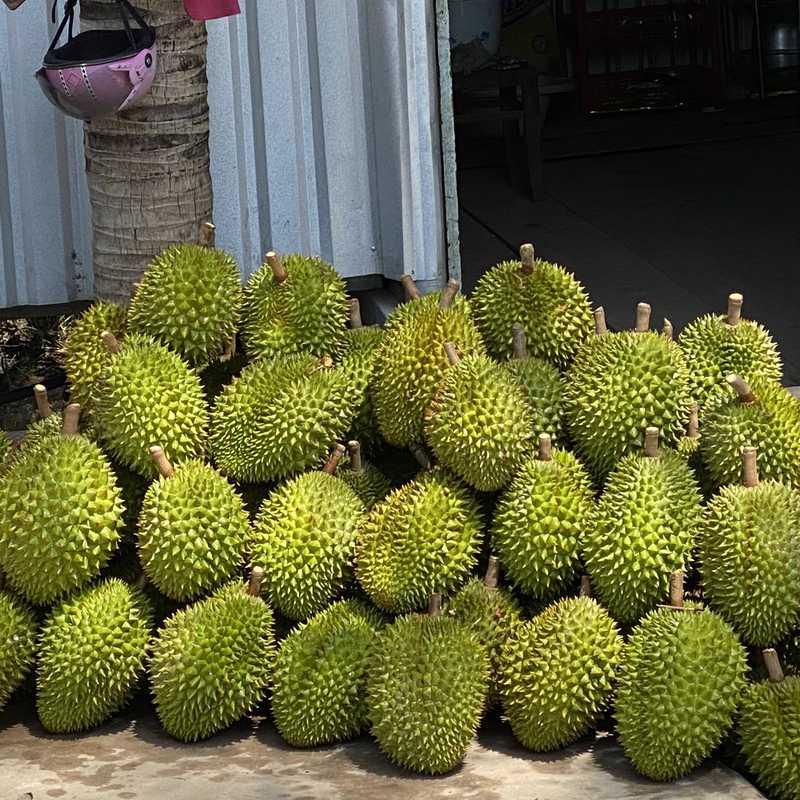 Trip Blog Post by @ASHIYK: VIETNAM LONG XUYÊN - BẠC LIÊU 2020   1 day in Feb (itinerary, map & gallery)