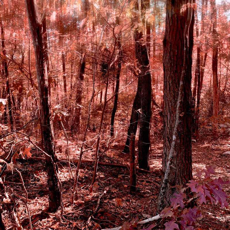 Cheaha Trailhead Pinhoti Trail