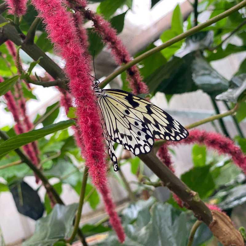 Butterfly Garden, Grevenmacher