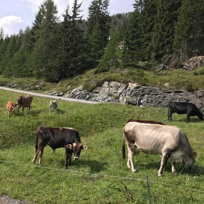 Churwalden to Sulzano