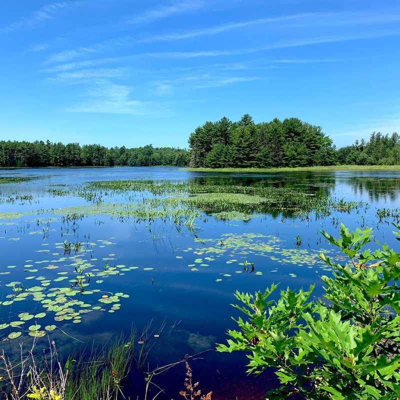 Hamilton Pond