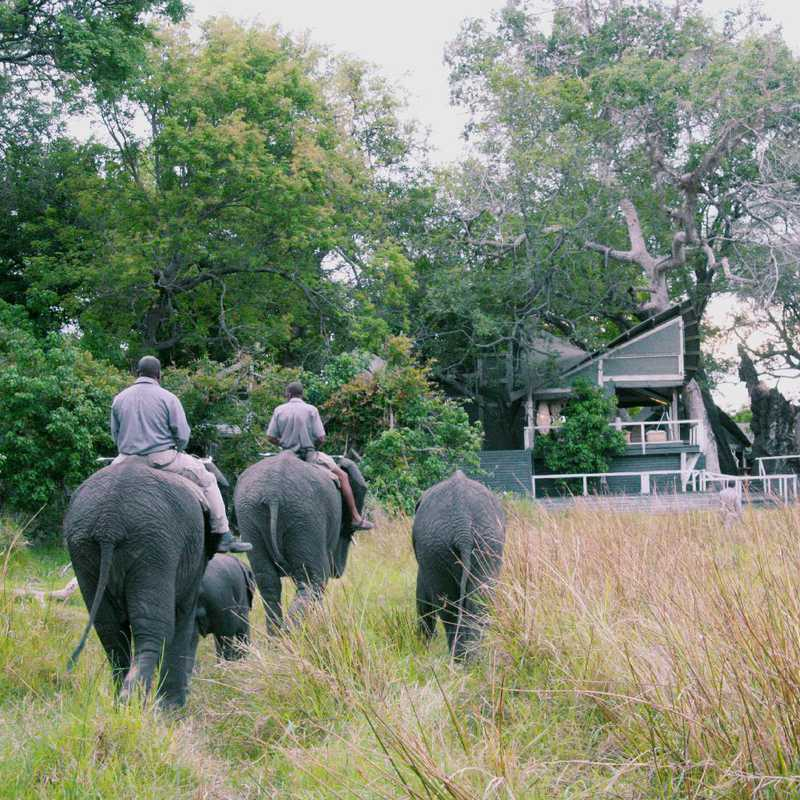 Meet the Abu Herd & Elephant Ride