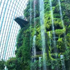 Cloud Forest - Photos by Real Travelers, Ratings, and Other Practical Information