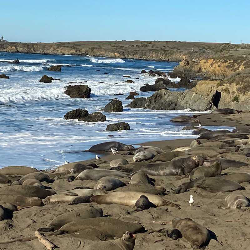 Elephant Seal Viewing Point