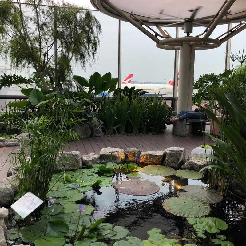 Cactus Garden - Changi Airport T1