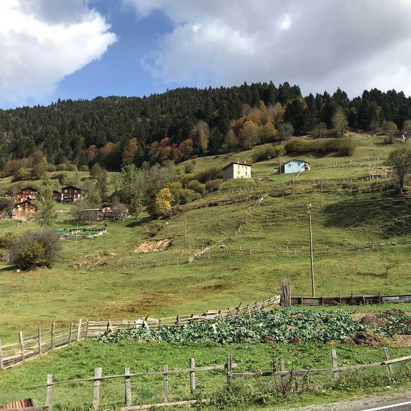 Çamlık Köyü Merkez