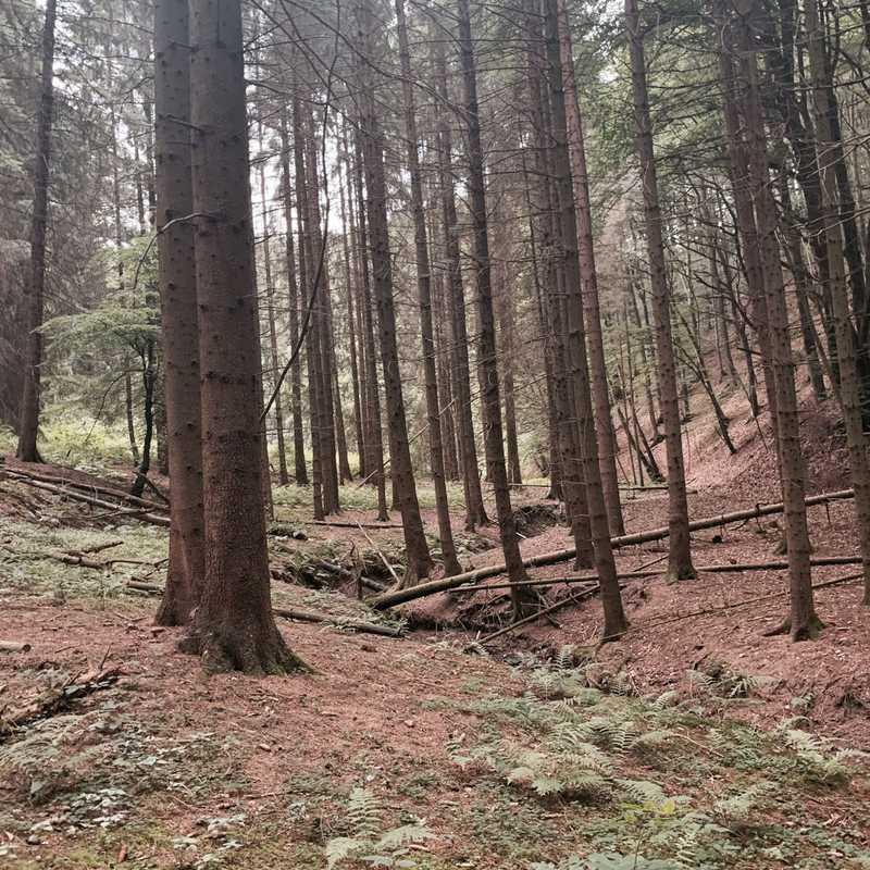 Landesbetrieb Wald u. Holz NRWForstbetriebsbezirk Overath