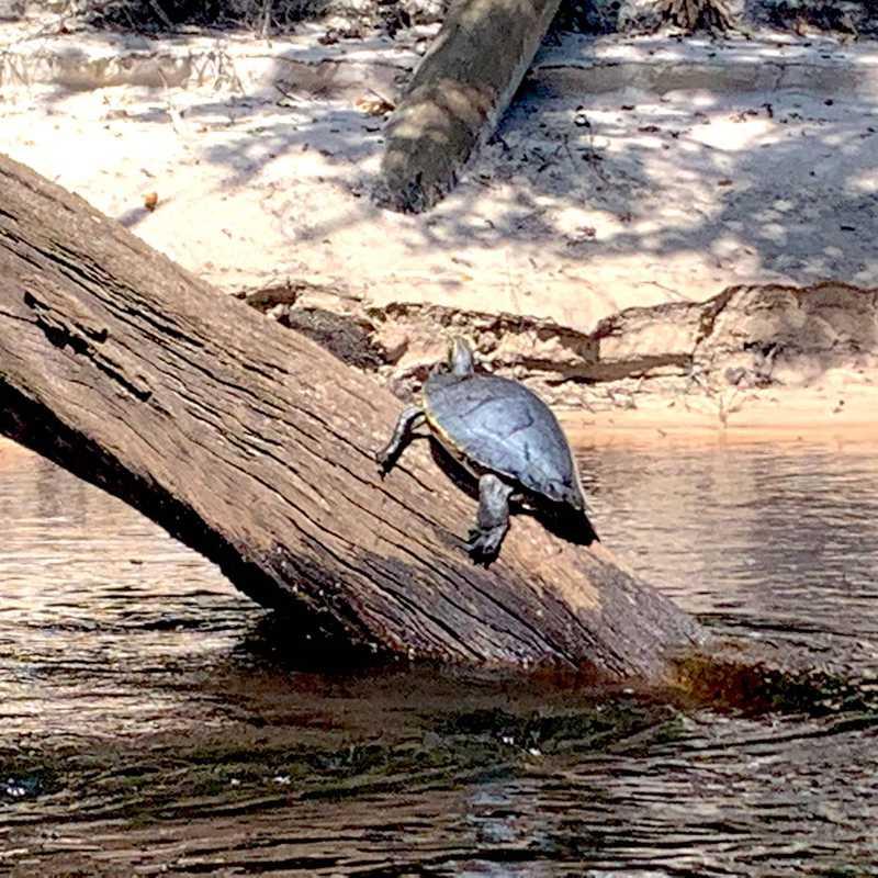 Suwannee River float