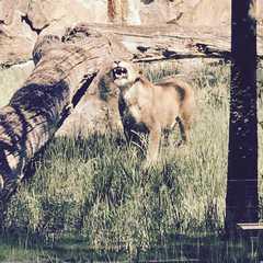 Zoo Berlin / Zoologischer Garten Berlin - Photos by Real Travelers, Ratings, and Other Practical Information