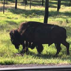 Custer State Park - Photos by Real Travelers, Ratings, and Other Practical Information