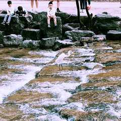 Cheonggyecheon Stream / 청계천