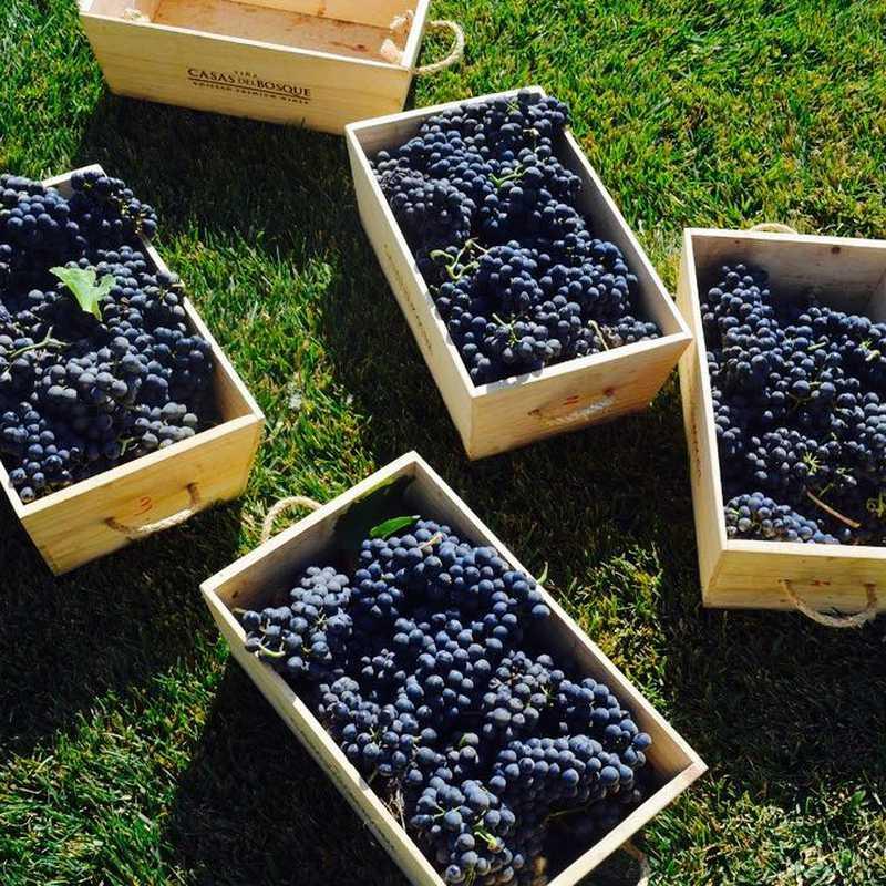 Winery Casas del Bosque