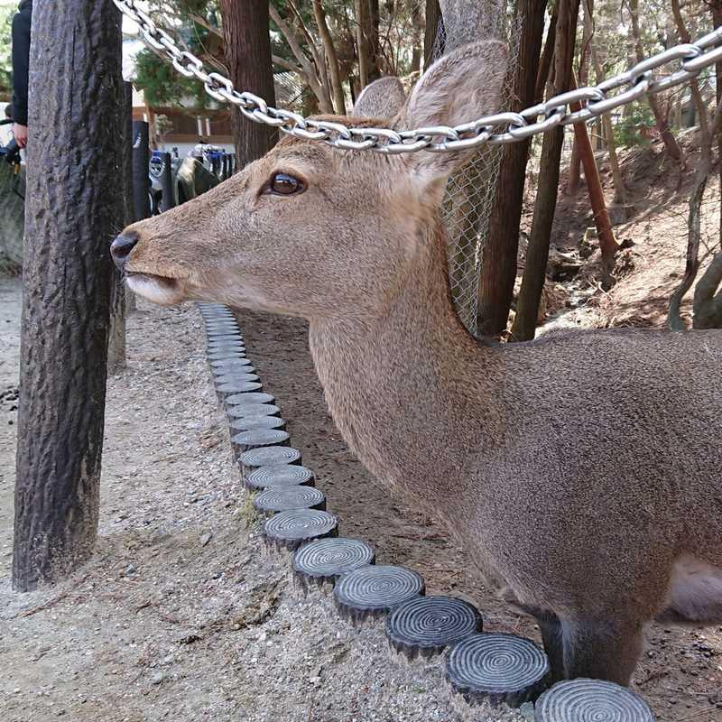 Nara - Hoptale's Destination Guide