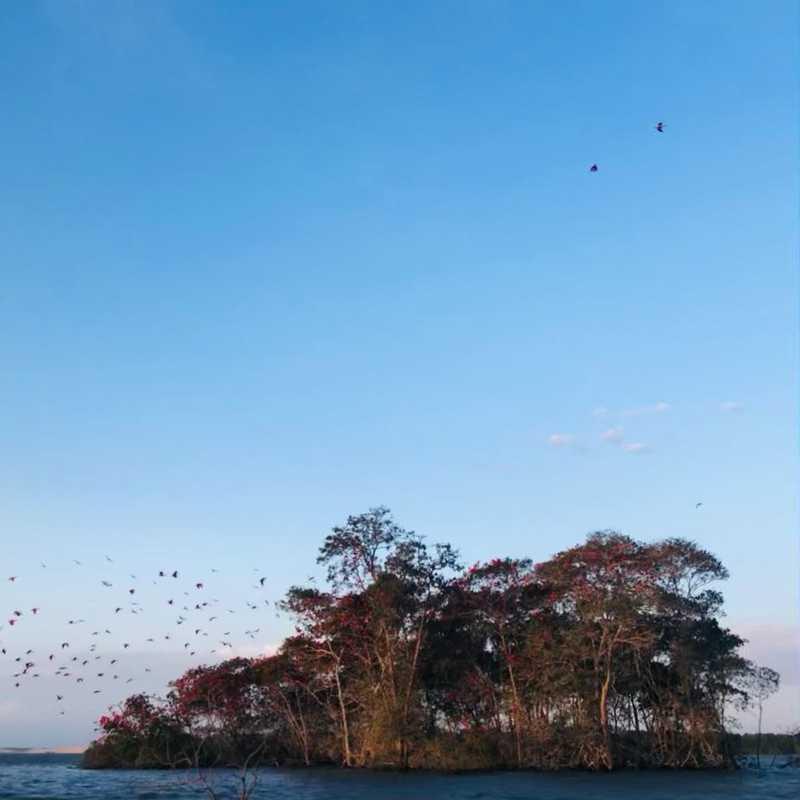 Ilha do Caju