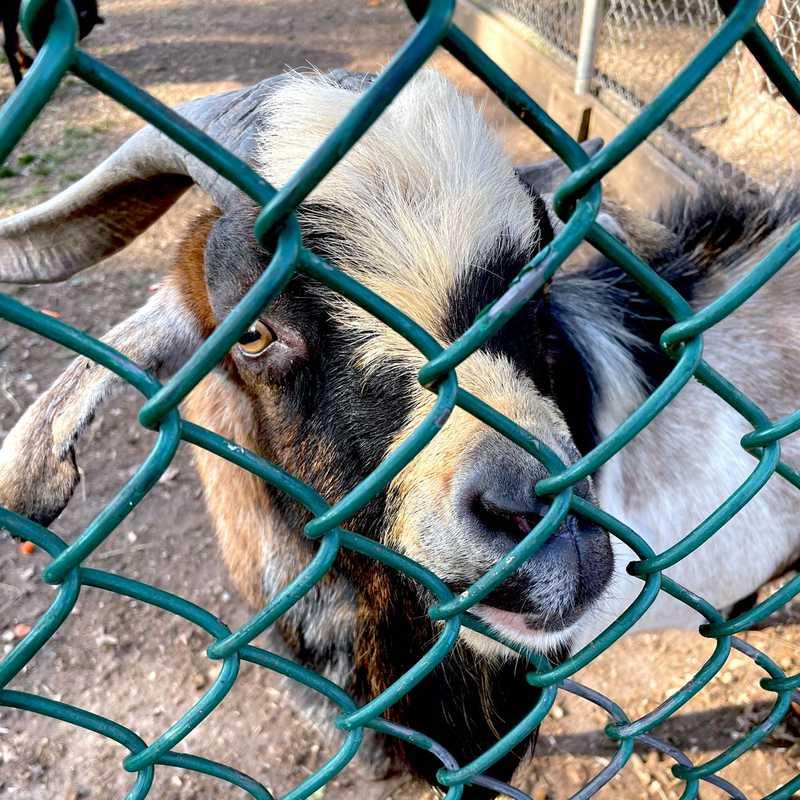 Johnson Park Zoo