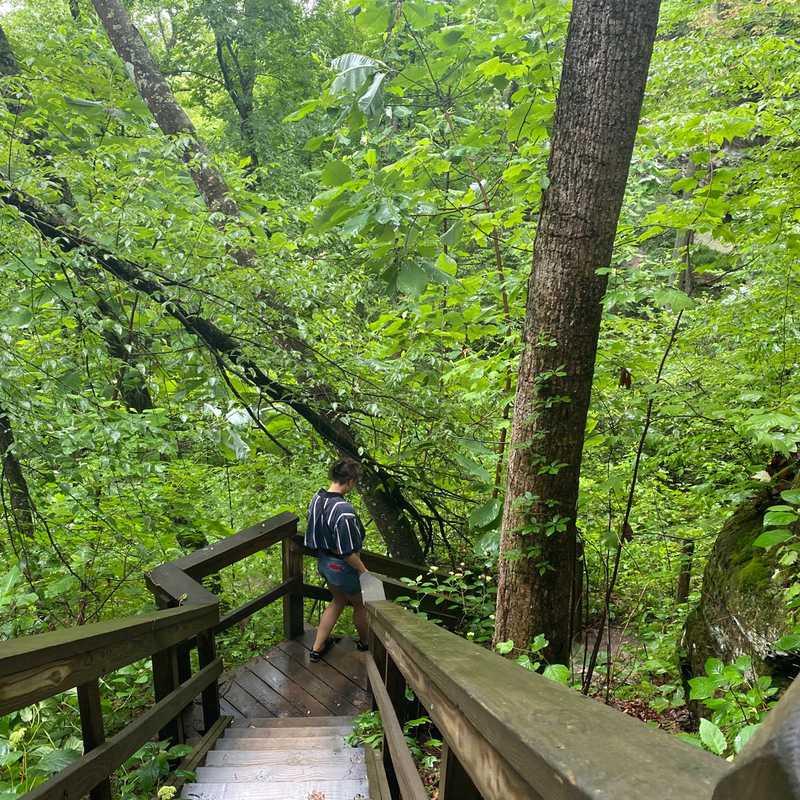Rainforest to waterfall