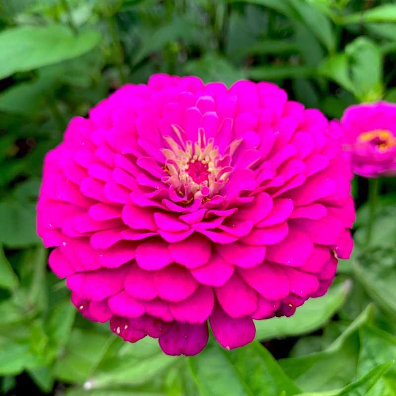 Thuya Garden