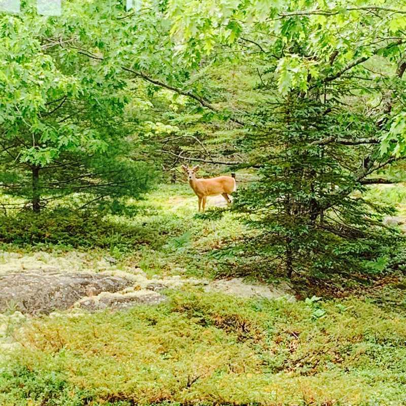 The Deer & The 3 Turkeys