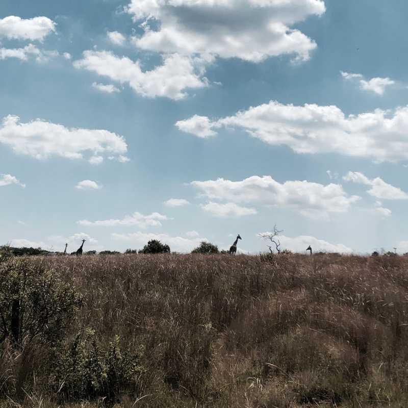 Johannesburg | 6 days trip itinerary, map & gallery