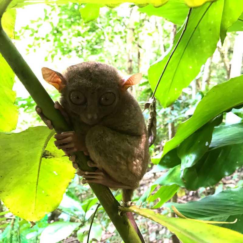 Loboc Wildlife & Nature Park