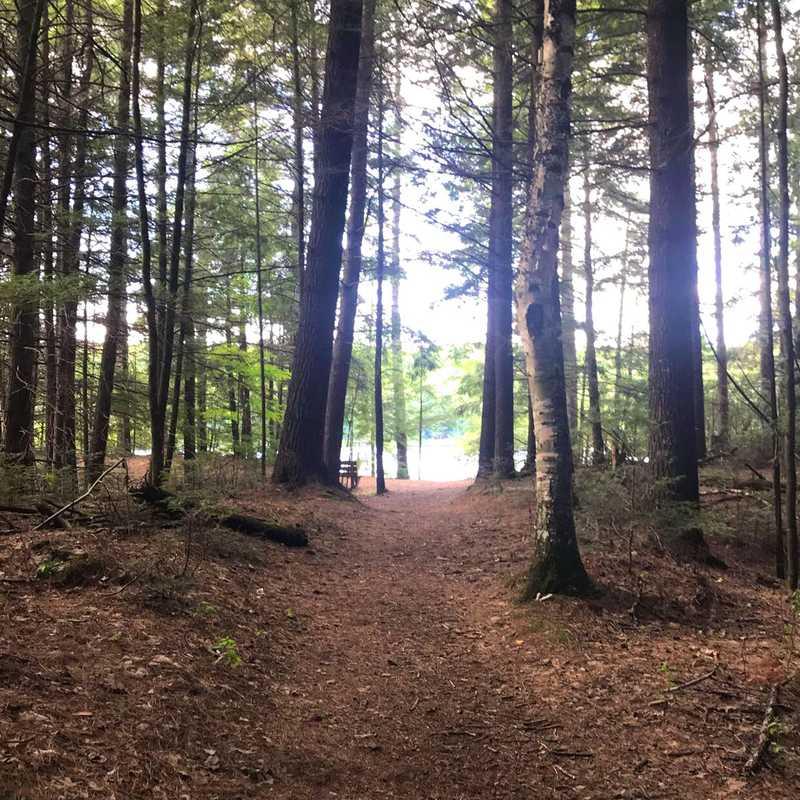 Northern Highland–American Legion State Forest