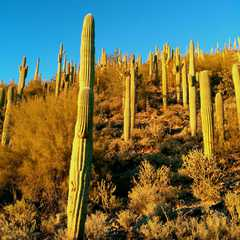Saguaro Lake Ranch Stables