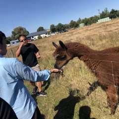 Gem Alpaca Stud   POPULAR Trips, Photos, Ratings & Practical Information