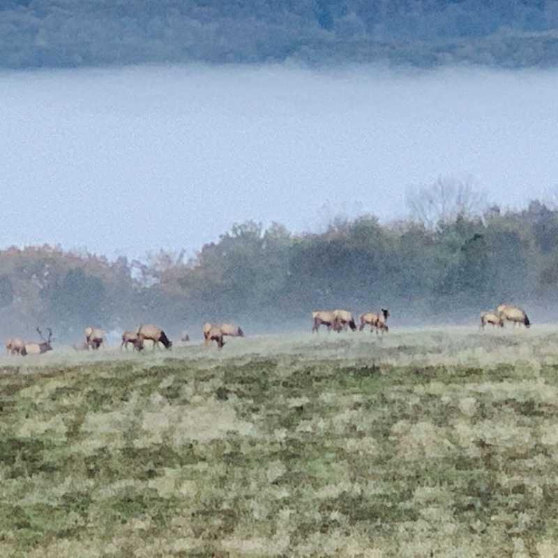 Winslow Hill Elk Viewing Area