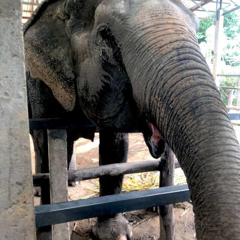 Elephant Sanctuary Camp 9