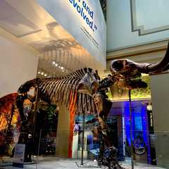 Smithsonian National Museum of Natural History | Travel Photos, Ratings & Other Practical Information