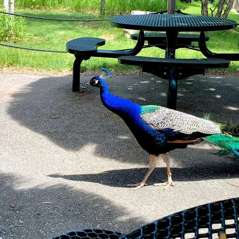 NEW Zoo & Adventure Park