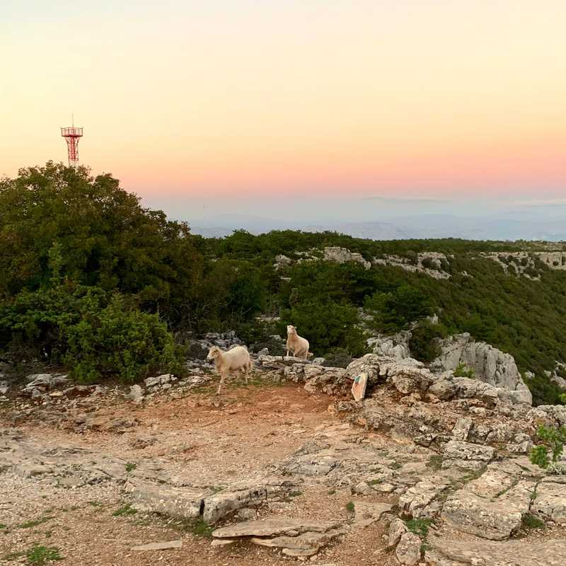 Sunset and Sheep