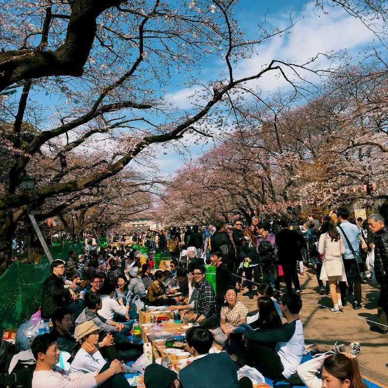 Place / Tourist Attraction: Ueno Park (Taito, Japan)