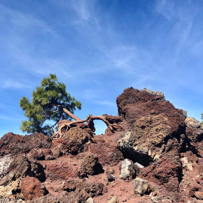 Trip Blog Post by @Charleseric: Cañadas del Teide - Tenerife - Spain | 1 day in Nov (itinerary, map & gallery)