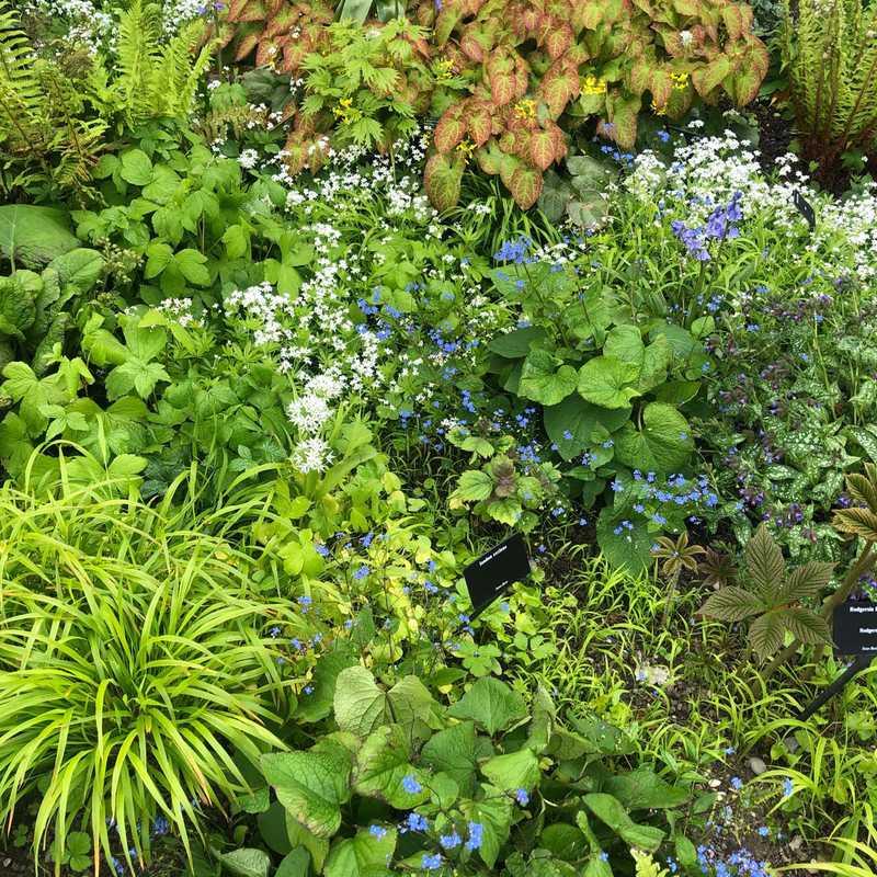 The Garden of Five Senses - Yvoire