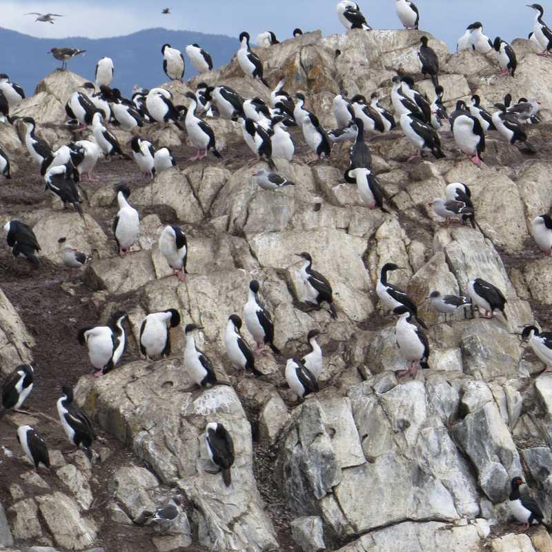 Seal Bay