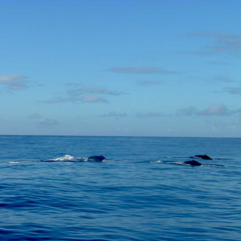 Dolphin & Whale Watch