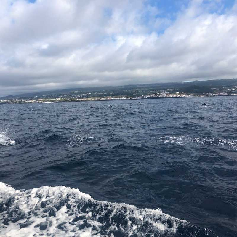 OceanEmotion | Whale Watching in the Azores, Terceira Island