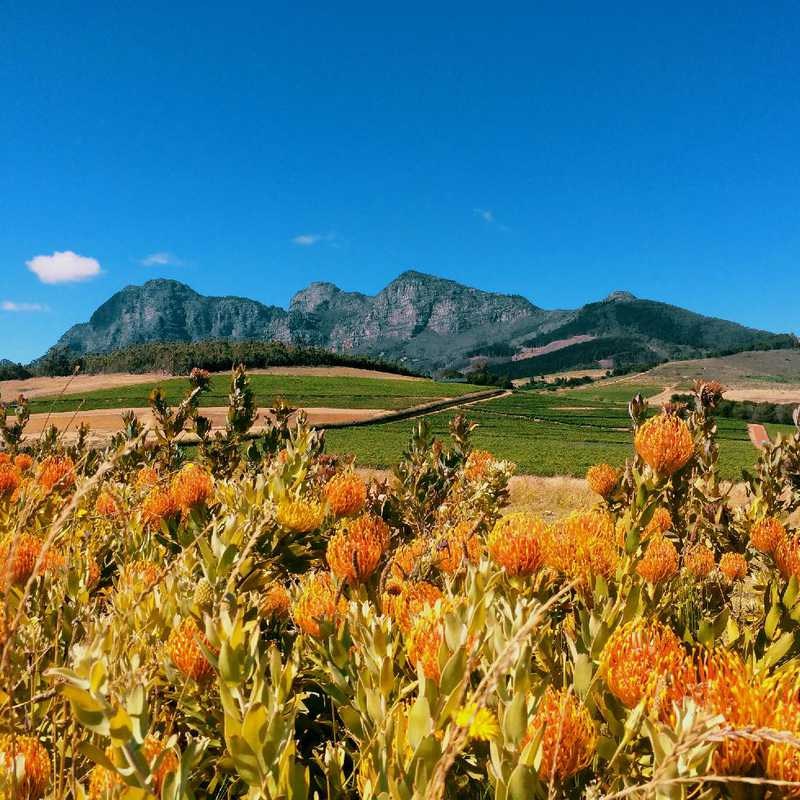 Cape Town and Winelands | 7 days trip itinerary, map & gallery