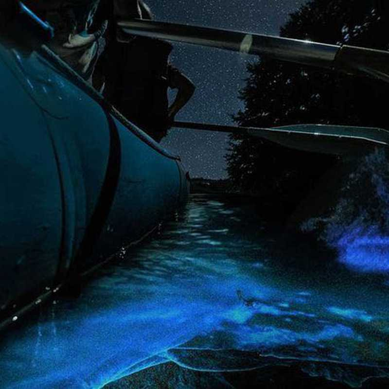 Bioluminescent Kayaking