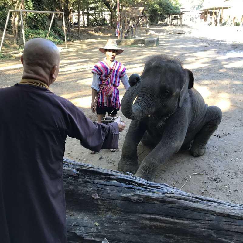 Maetaman Elephant Camp & Bamboo Rafting
