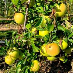 Terhune Orchards - Pick Your Own | POPULAR Trips, Photos, Ratings & Practical Information