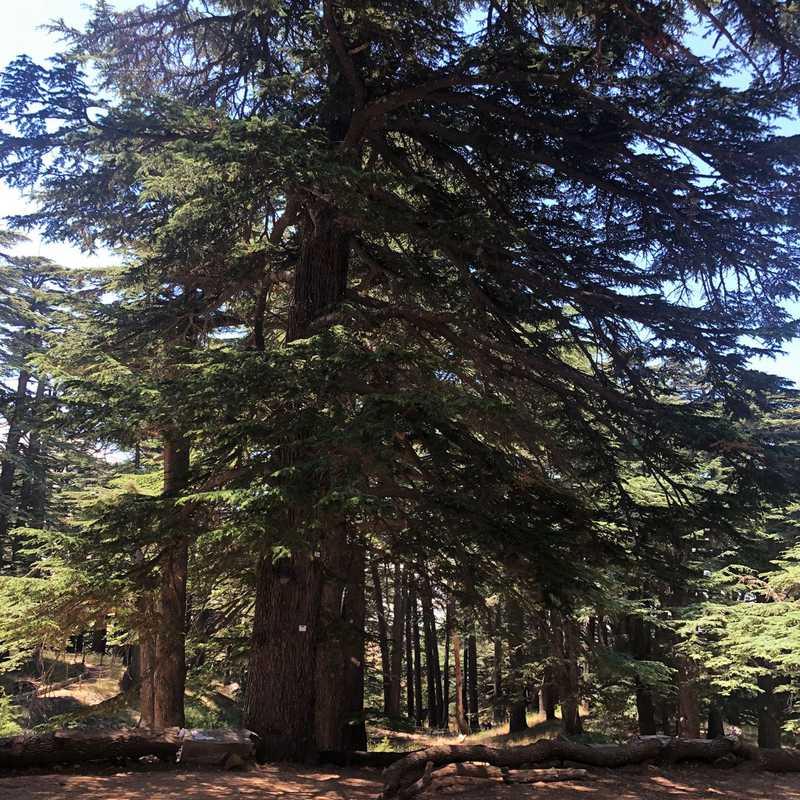 Cedars Of God Bsharri