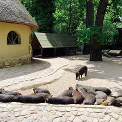 Zoo Berlin / Zoologischer Garten Berlin