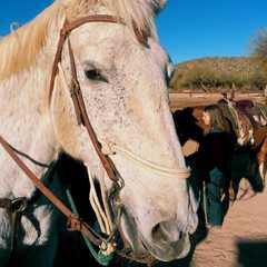 Saguaro Lake Ranch Stables | POPULAR Trips, Photos, Ratings & Practical Information