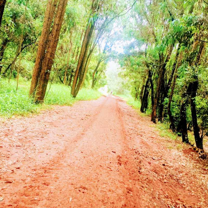 Trip Blog Post by @MissBee: Karura Forest, Kenya 2020 | 1 day in Apr (itinerary, map & gallery)